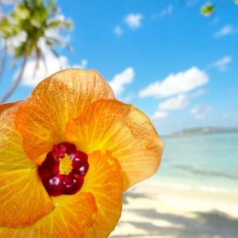 Tropical Flower. Thulusdhoo, Maldives.