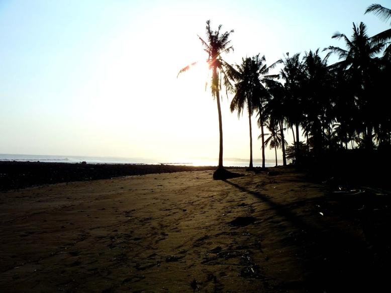 Medewi Palms